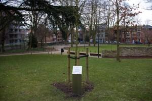 Foto van de boom